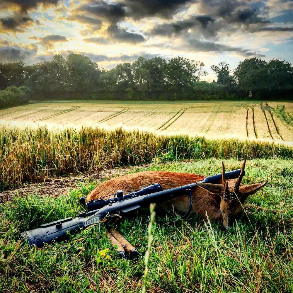Deer - West Country Shooting Show.jpg