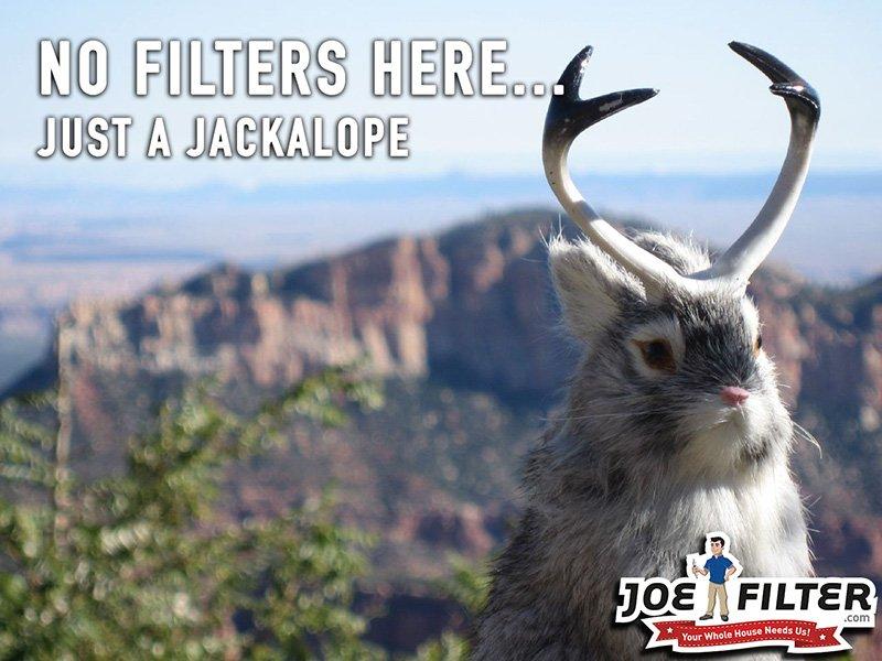 404-jackalope.jpg