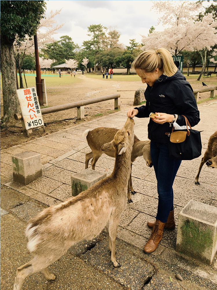 Petting Deer in Nara, Japan