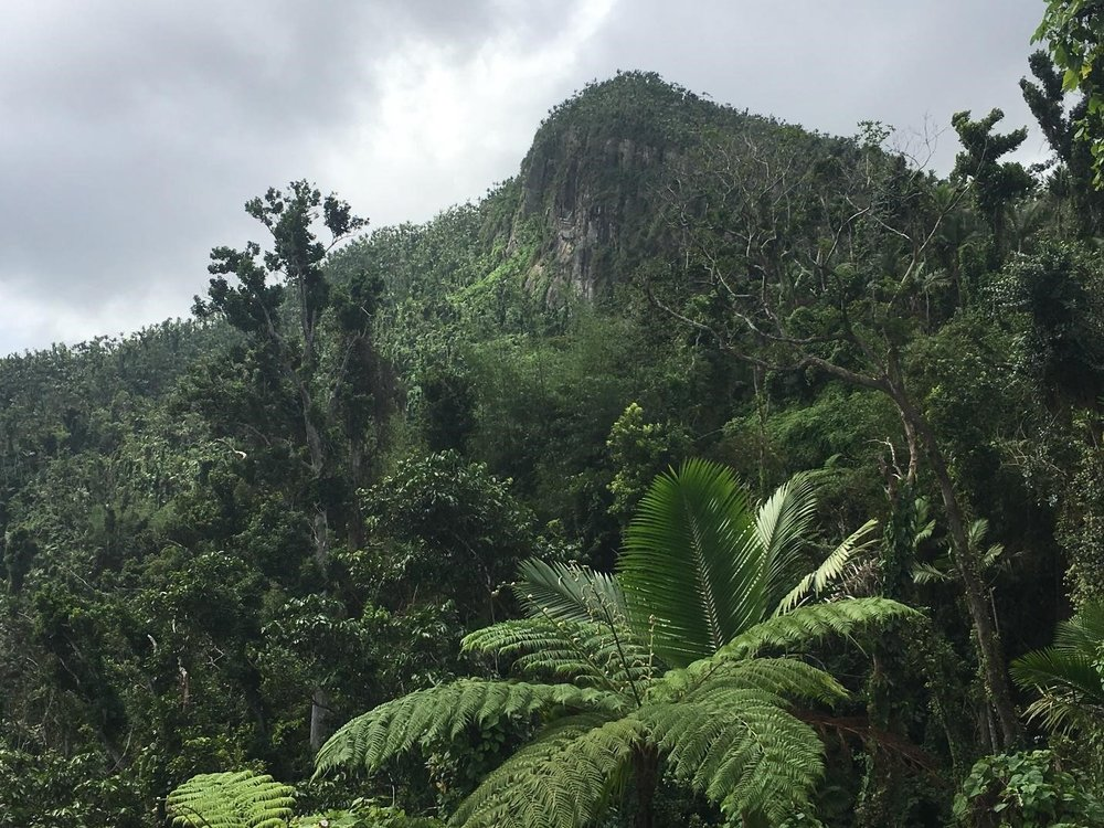 Mountain summit in El Yunque