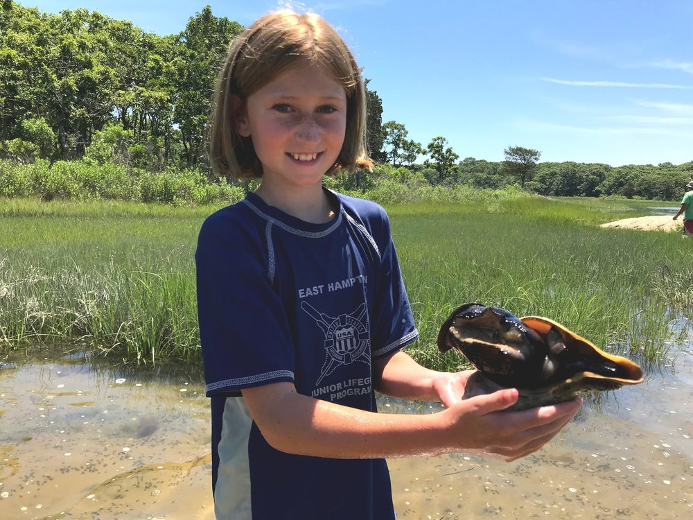 outside the classroom - The Group gets kids outdoors! We work with schools, scouts and youth groups across the East End to offer programs that are engaging, informative and fun! Students explore forests and estuaries, create school and community gardens and plant beach grass to prevent erosion of our ocean dunes. Our experienced educators inspire children to learn about nature and to appreciate the sight of an osprey returning to her nest or a fiddler crab crawling on the sand. The Group leads local students to become the future conservationists of eastern Long Island.Download: Outside the Classroom Lessons 2018-2019