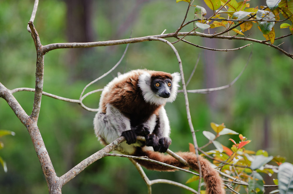 MADAGASCAR - Land of the Lemurs