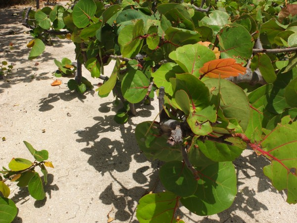 b2ap3_thumbnail_bal-harbour-mangroves.JPG