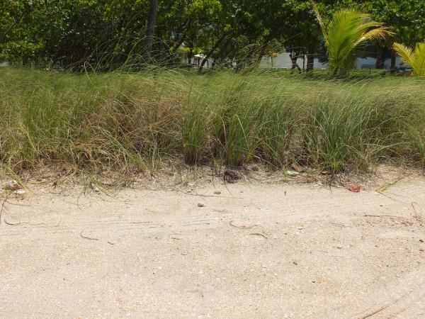 b2ap3_thumbnail_bal-harbour-sea-grass.JPG