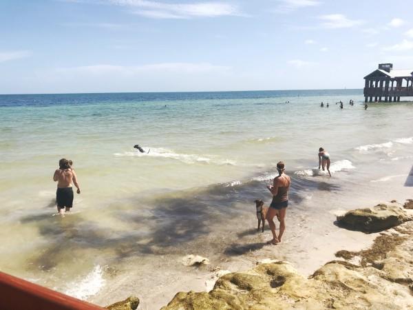 b2ap3_thumbnail_dog-beach-key-west-3.JPG