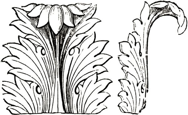 design-dictionary-acanthus-line-drawing.jpg