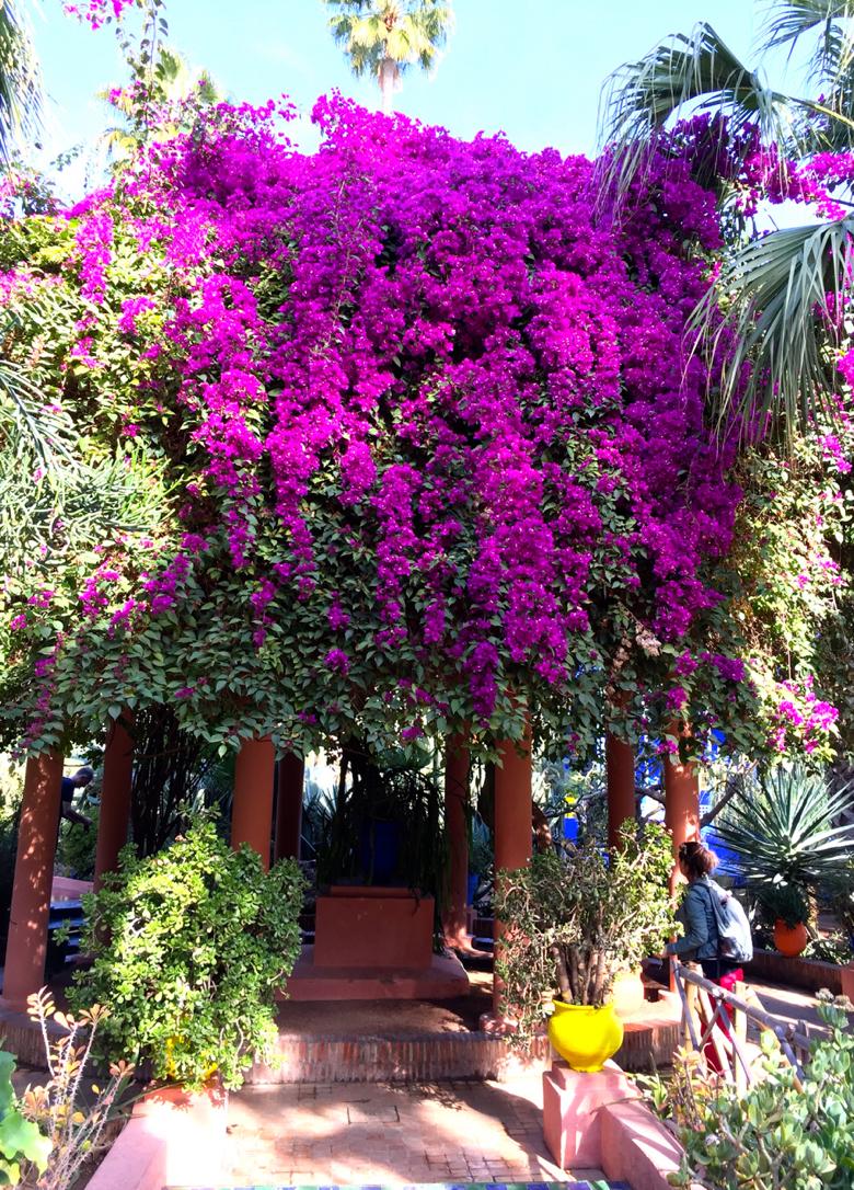 My-visit-Majorelle-Gardens-Jardin-Majorelle-bougainvillea.jpg