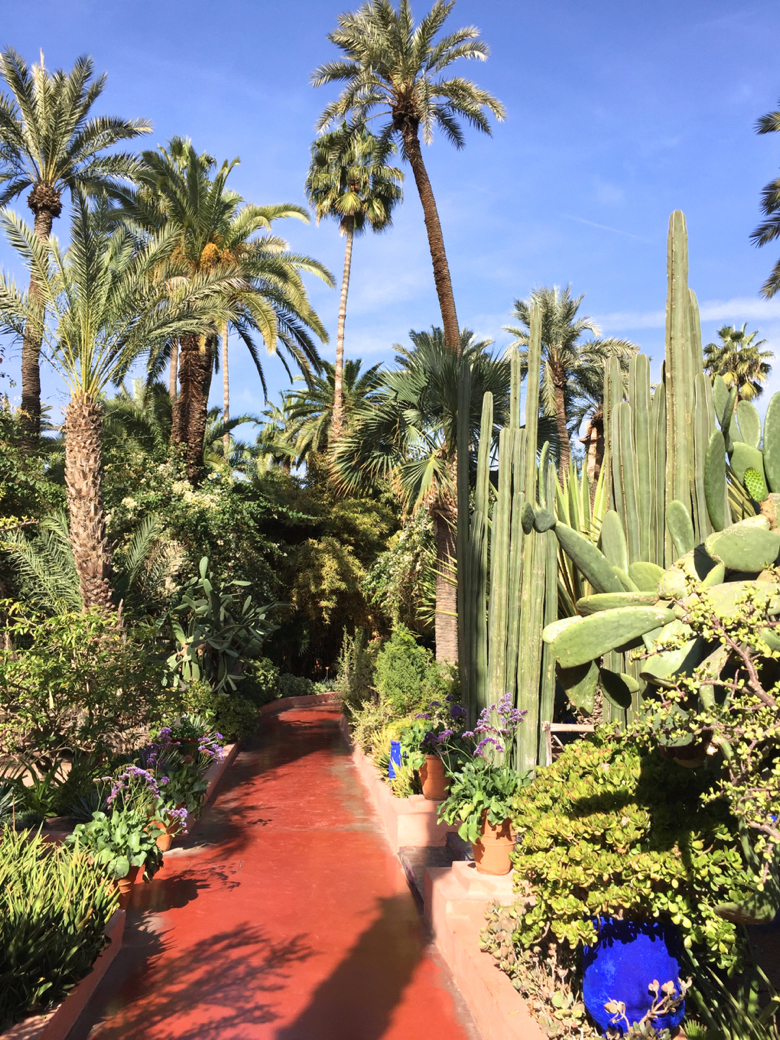 My-visit-Majorelle-Gardens-Jardin-Majorelle-Cactus.jpg
