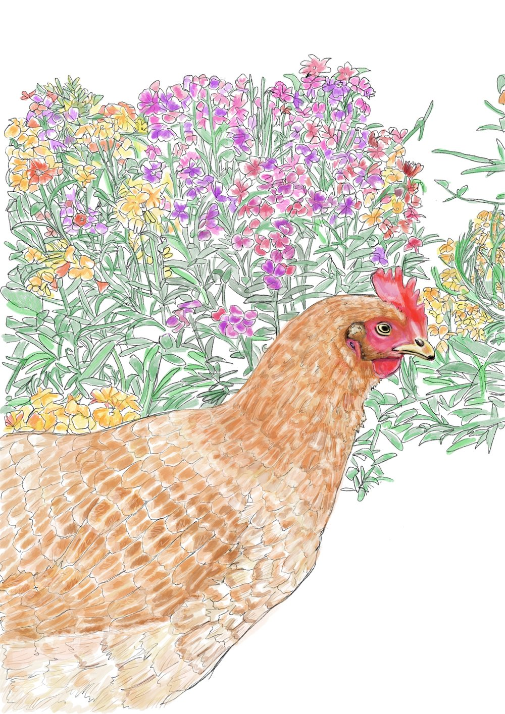 CJ a much loved ex battery Hen who belonged to Rachel of @thegoodlifeainteasy blog, this portrait was handrawn using an apple pencil and procreate on an ipad.