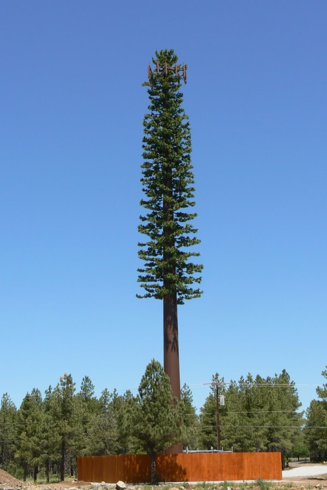 telephone-pole-tree.jpg