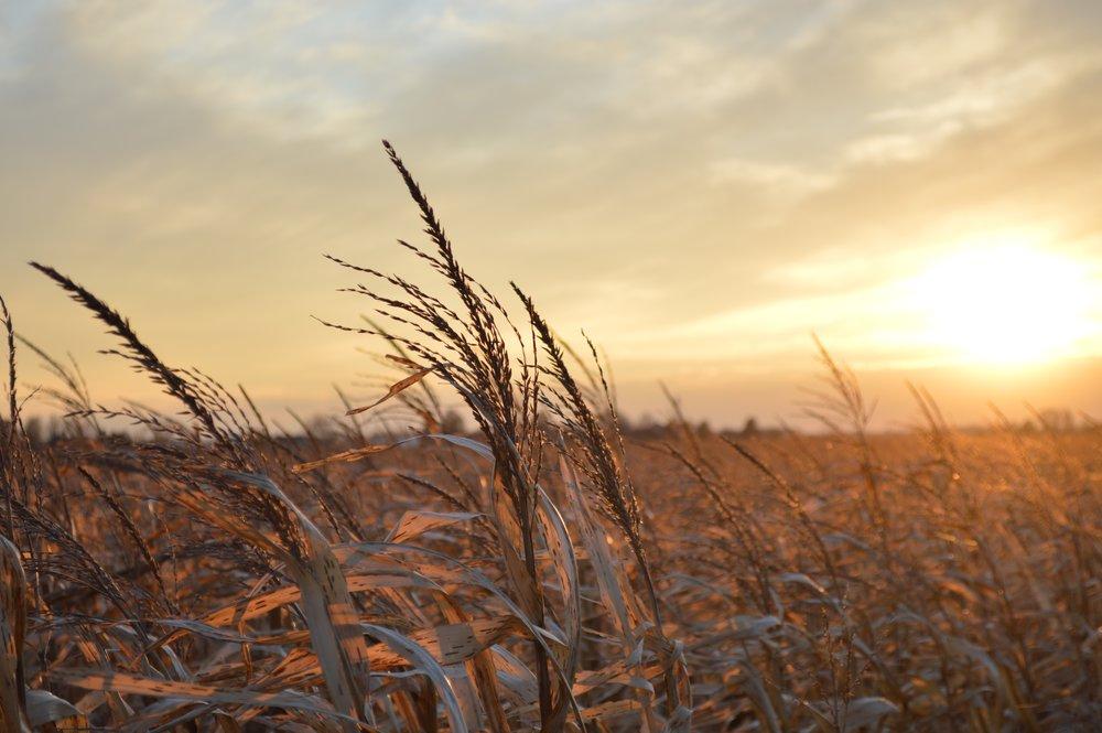 landscape-tree-nature-grass-horizon-cloud-996519-pxhere.com.jpg