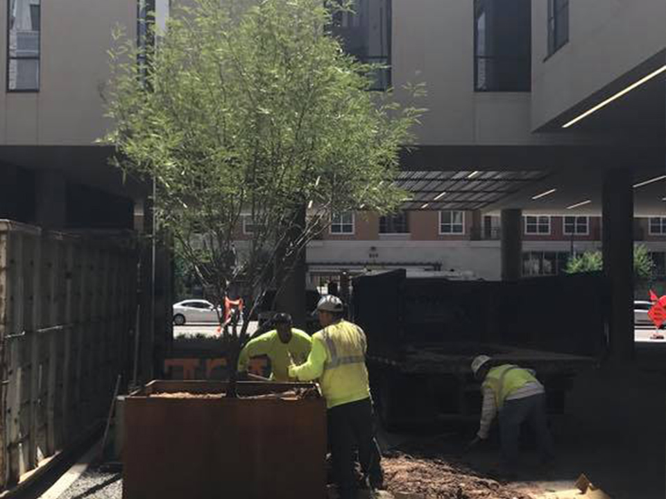 TREE CARE - Our Tree Care Division provides you with peace of mind as our certified experts protect your investment and maintain a safe, aesthetically appealing and inviting environment. Our team offers scheduled pruning, tree removal and proactive maintenance, as well as emergency services.