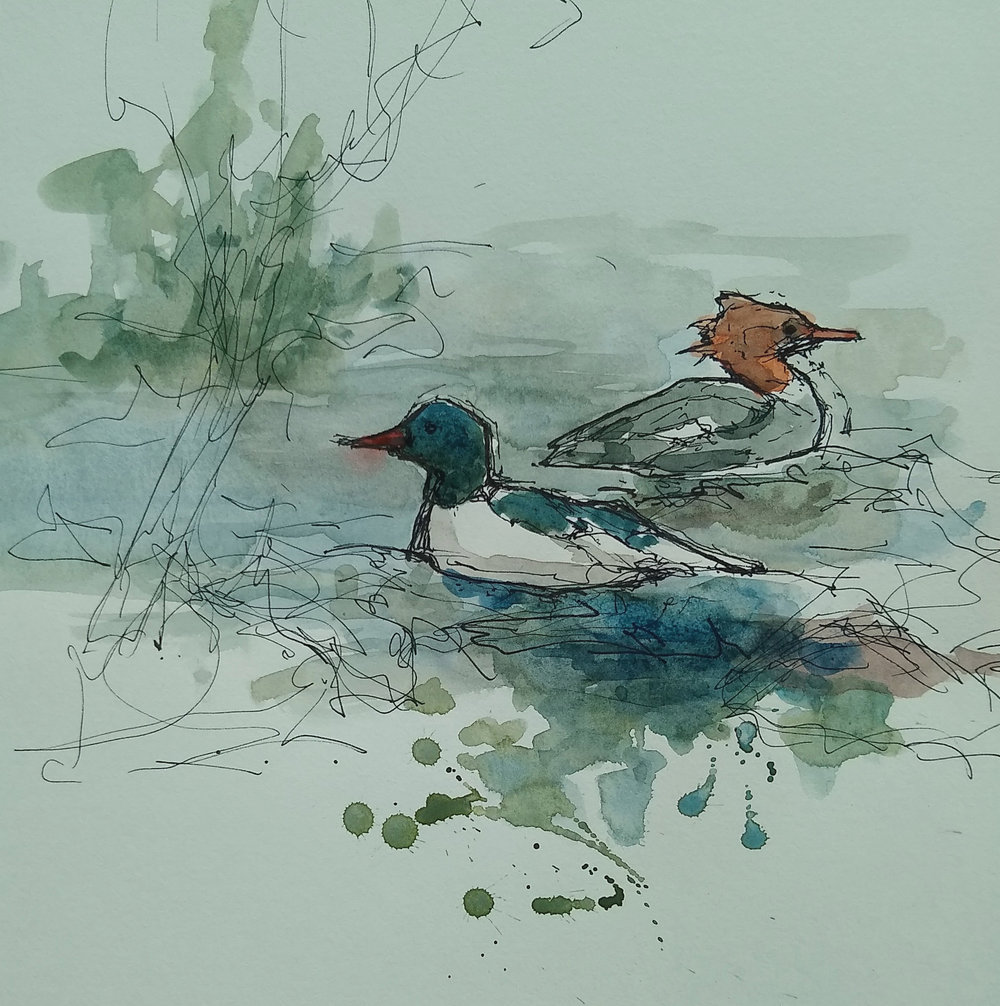 merganser crop.jpg