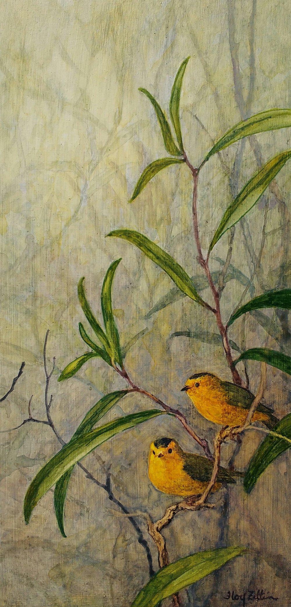 "Wilson's Warblers 12"" x 6"" watercolor on wood panel 2107"