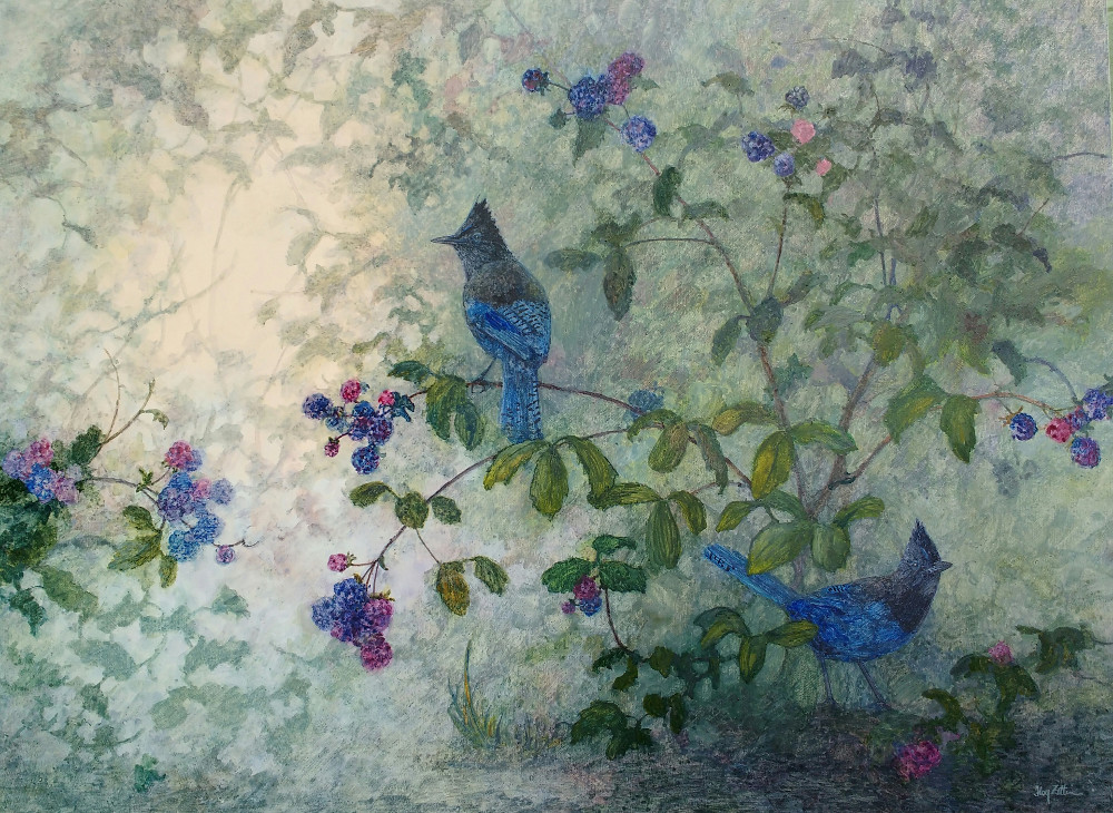 "Steller's Jays and Blackberries 18"" x 24"" watercolor on wood panel"