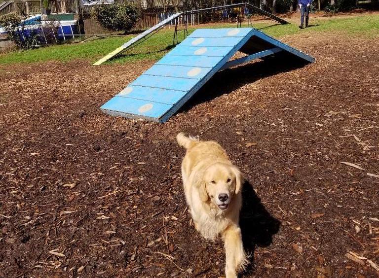 Doggie Day School -