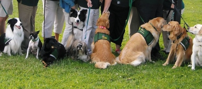 Therapy, Emotional Support, & Comfort Dog Training -