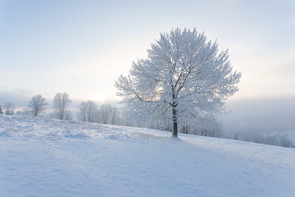 winter-01.jpg