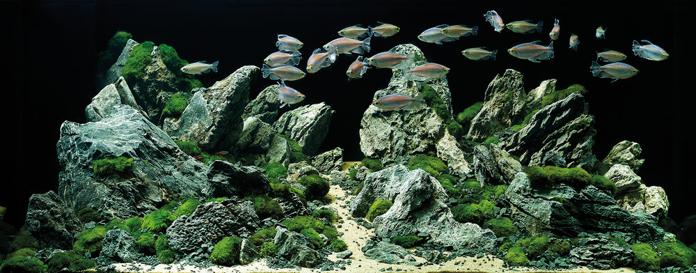 Indoor Aquatics - Bring advanced aquarium technology into your home!