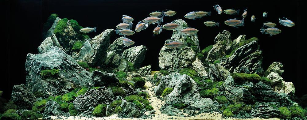 Aquatique intérieure - Apportez une technologie d'aquarium avancée dans votre maison!
