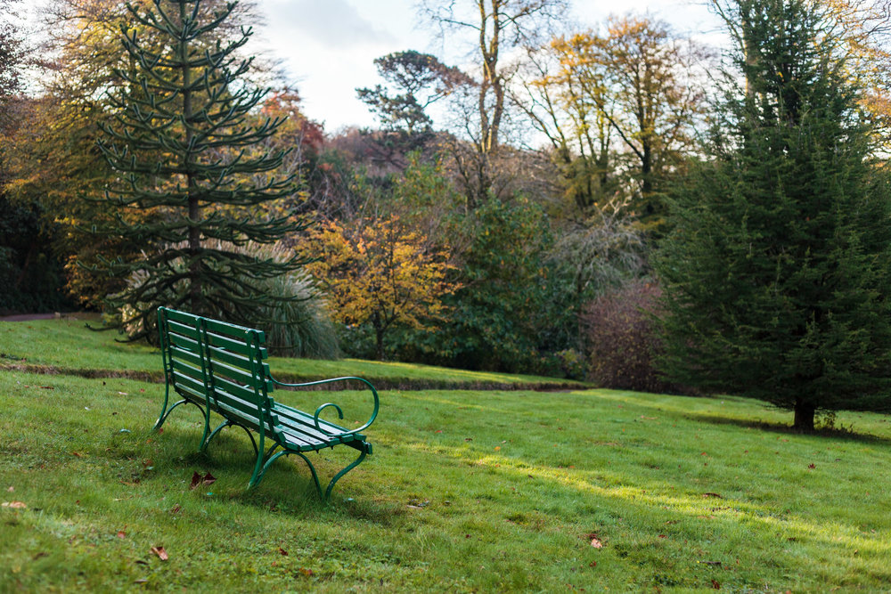dansoleyphotography-lukesland-gardens-autumn-2018-1.jpg