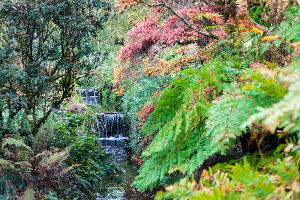 dansoleyphotography-lukesland-gardens-autumn-2018-9.jpg