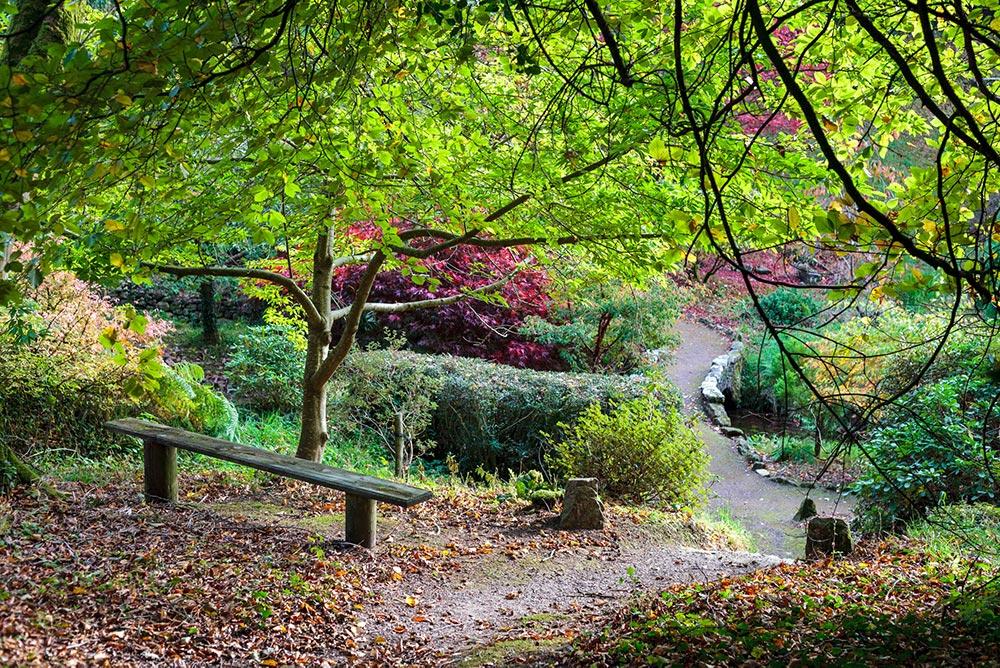 dansoleyphotography-lukesland-gardens-autumn-2018-22edsmall.jpg