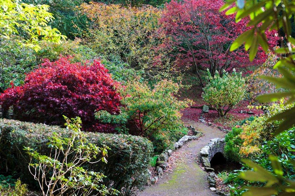 lukesland-gardens-autumn-dan-23.jpg