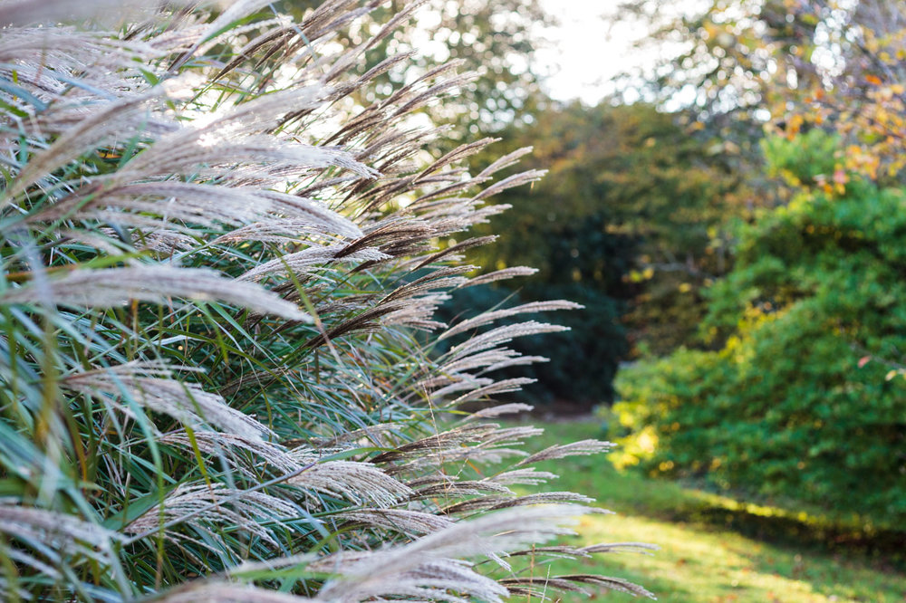 lukesland-gardens-autumn-dan-4.jpg