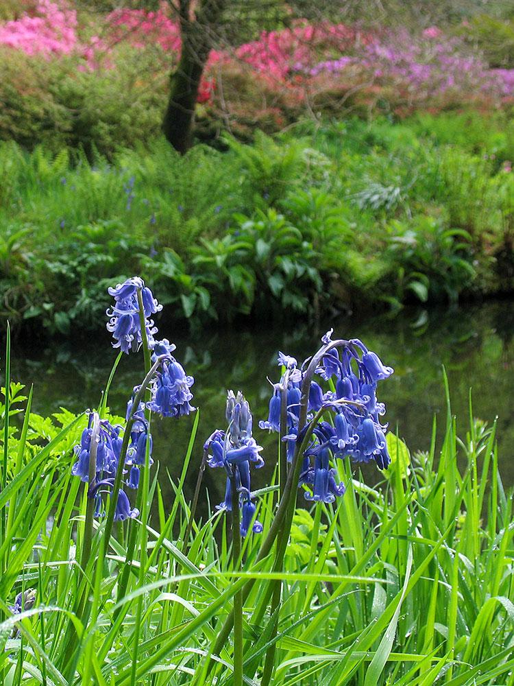 lukesland-spring-small-2ed.jpg