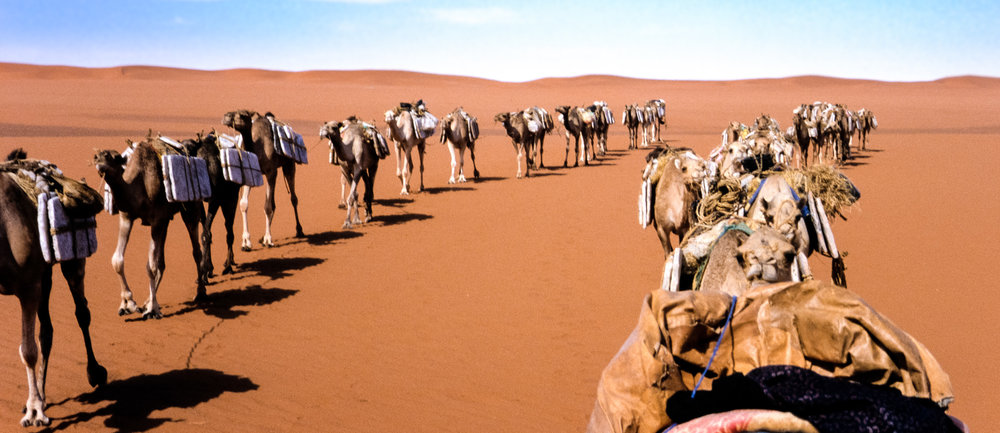 "The salt caravan crossing the Tanezrouft - the driest region in the Sahara - known as ""The Land of Terror"" and ""The Land of Death"""