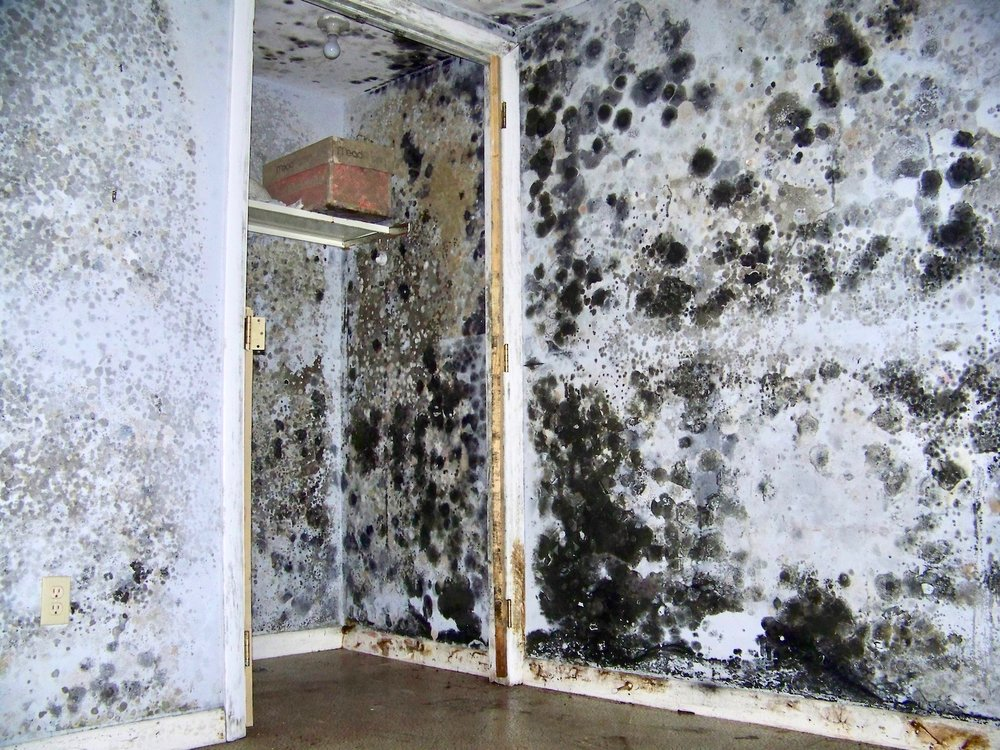 moldy-walls.jpg