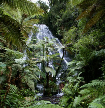 NewZealand-Waterfall-at-Treetops2.jpg