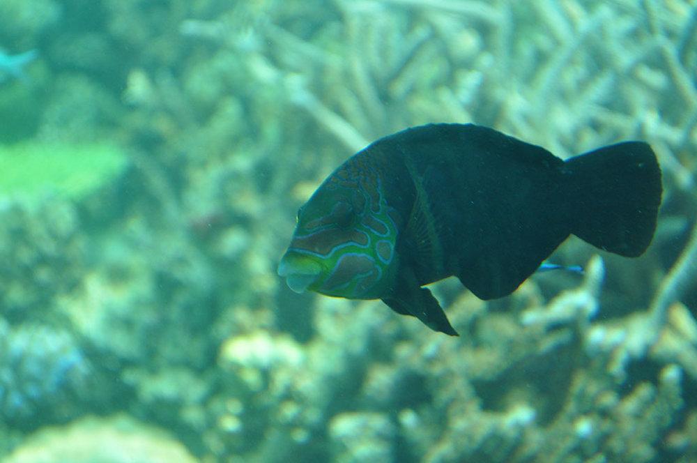 Maldives-HuvafenFushi-UnderwaterFish.jpg
