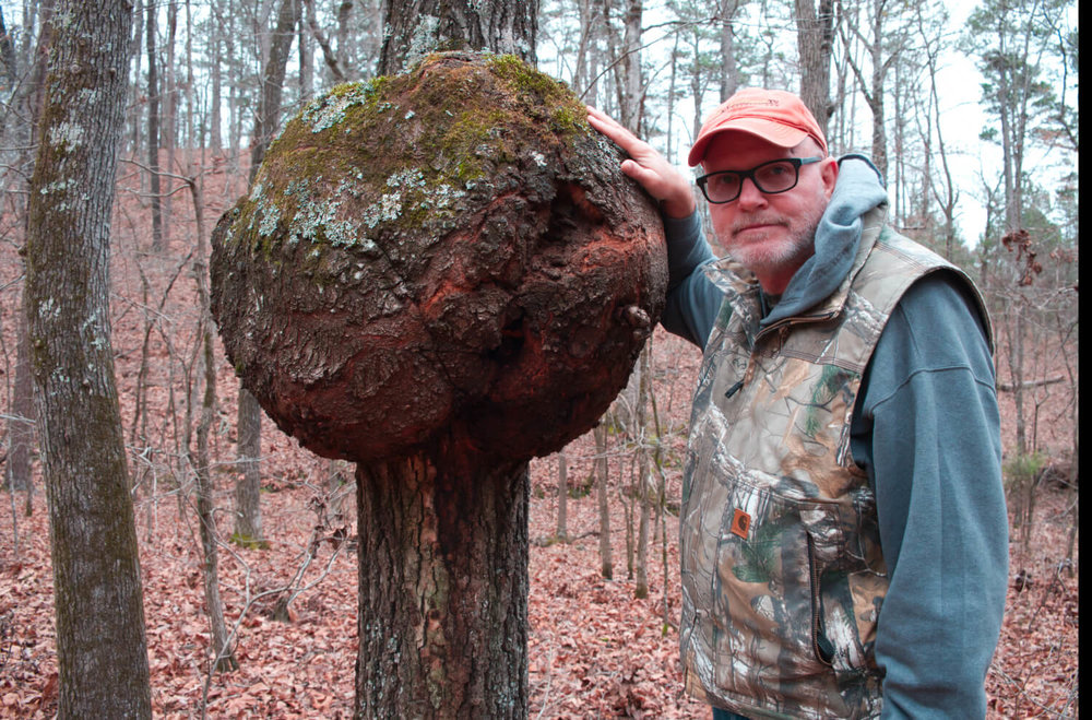 Steve Creek Standing Next To A Tree Gall
