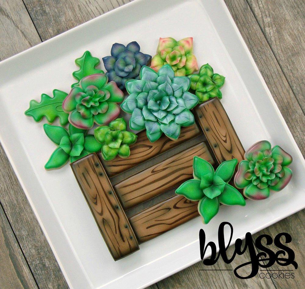 succulentsblyss.jpg