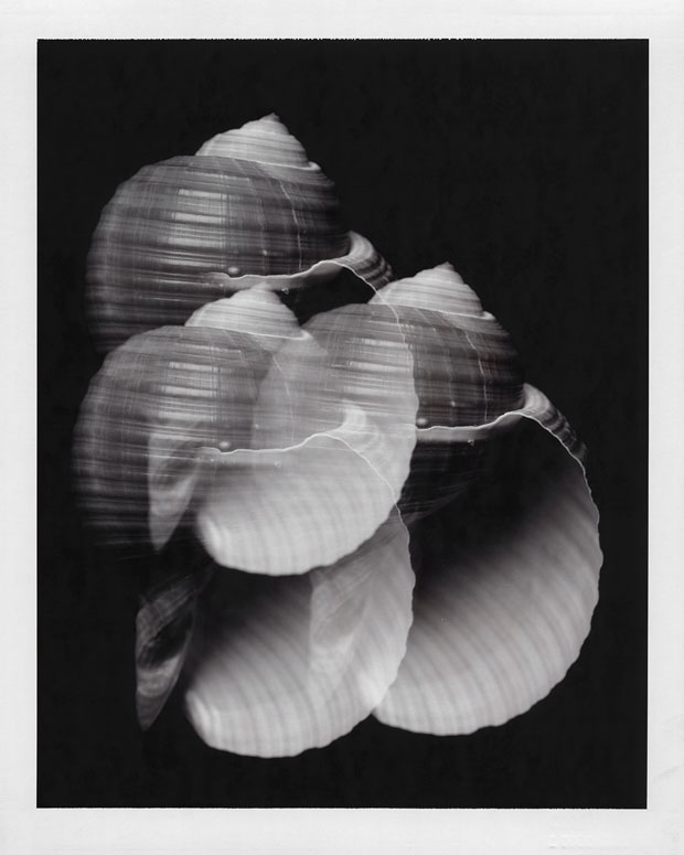 "SHELL TEST #2, 1996  8"" X 10"" POLAROID"