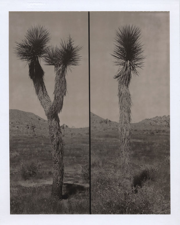 "JOSHUA TREE, 2005  8"" X 10"" POLAROID"