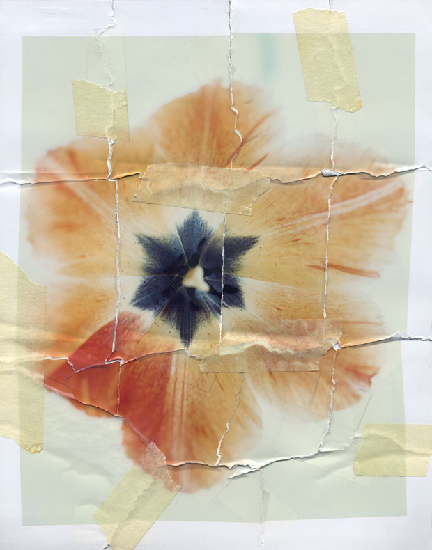 "IN BLOOM, 1993  8"" X 10"" POLAROID"