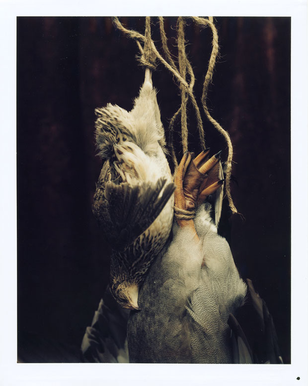 "DEAD QUAIL AND DUCK, 1999 8"" X 10"" POLAROID"