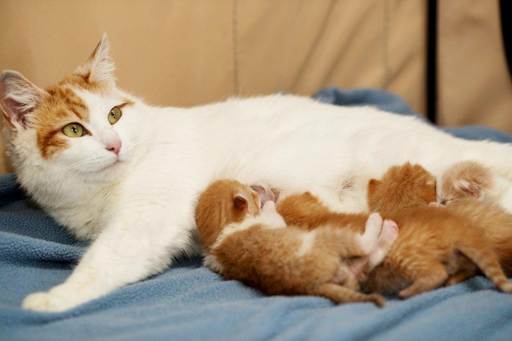 20180420-kitty foster-028.jpg