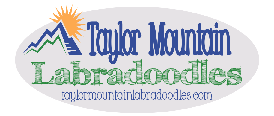 Taylor Mountain Labradoodles