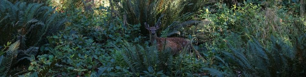 deer_compressed.jpg