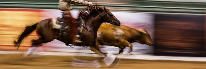 cowhorseblur.jpg