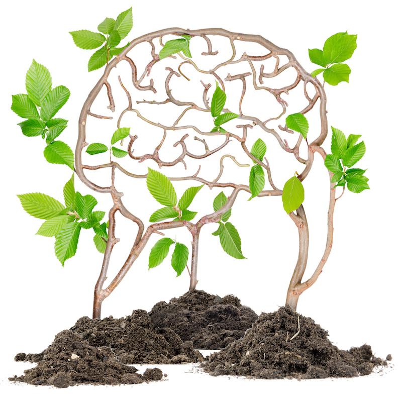 growing brain.jpeg