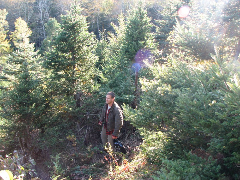 Most of the trees at the grove (and all trees for wholesale) are balsam fir.