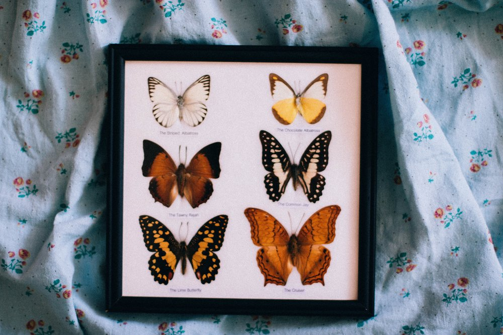 art-butterflies-cloth-704743.jpg