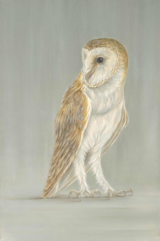 Barn Owl on Grey