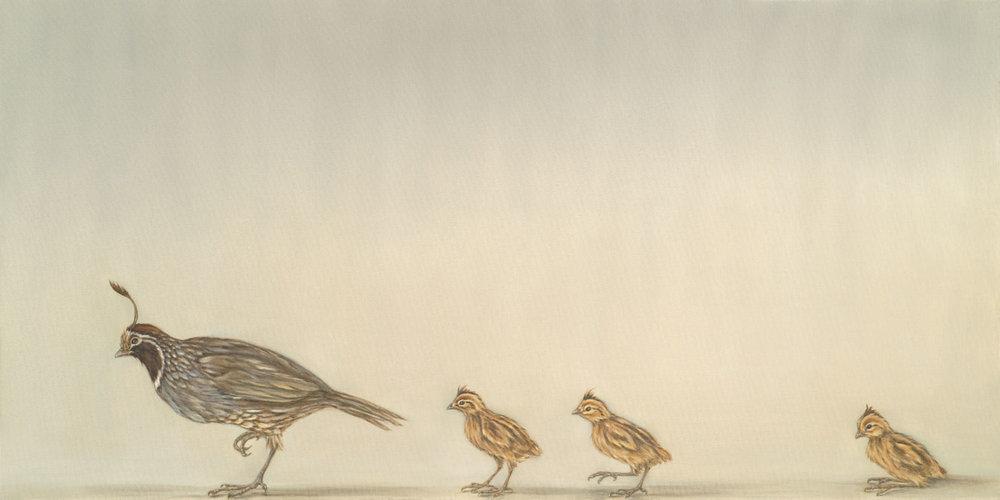 Quail and Chicks