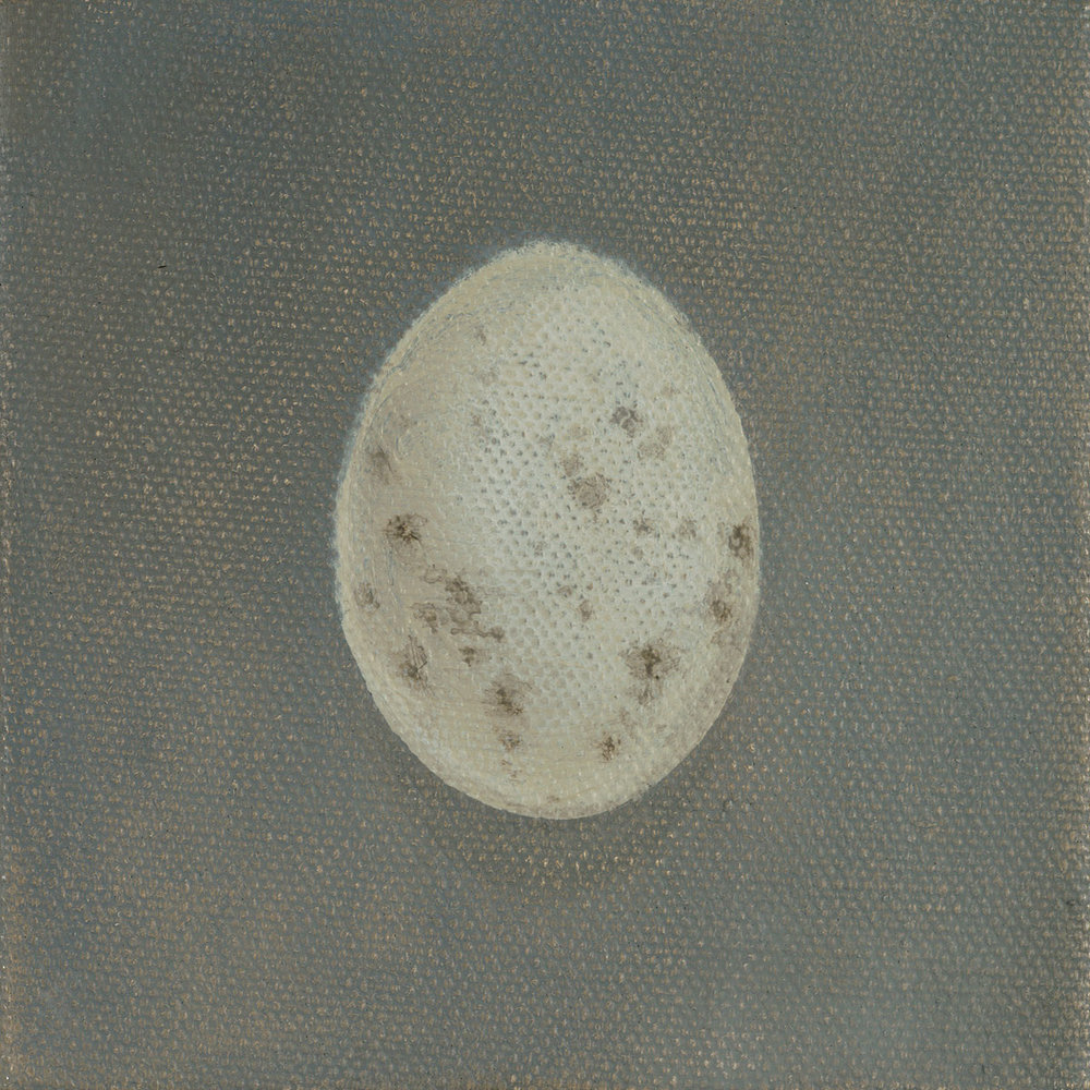 Blackbird Egg